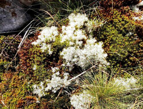 Se medmänniskan – Låt nya blommor växa fram